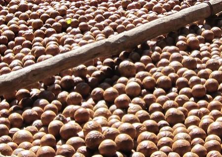 L'huile de macadamia bio : l'huile miraculeuse