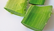 Le gel d'aloe vera, pourquoi et comment l'utiliser ?