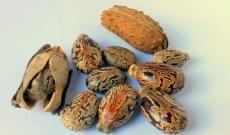 Huile de graine de ricin : un atout beauté pour les cheveux !